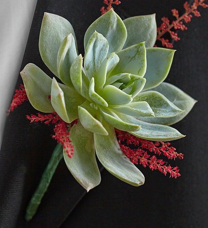 Vineyard Wedding Boutonniere Succulent