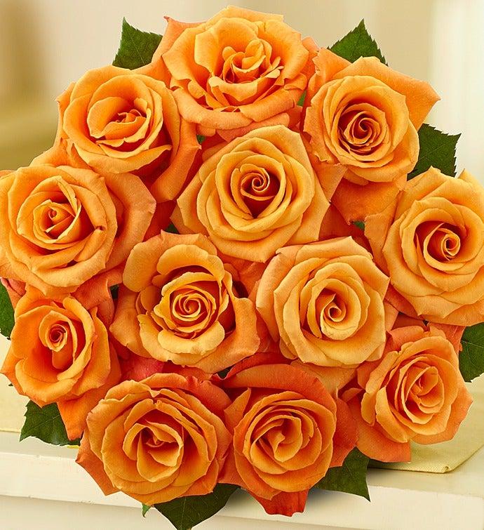 November's Roses