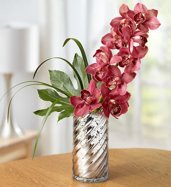 Bordeaux Cymbidium Orchid