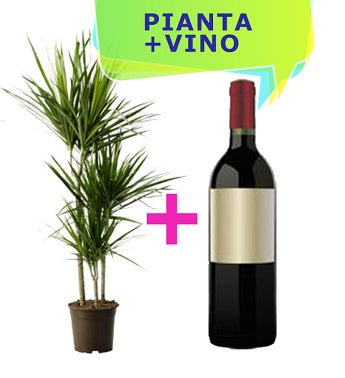 Plant and Wine Gift Set