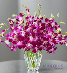 Luxurious Exotic Breeze™ Orchids