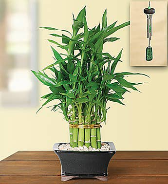 2 Layer Bamboo Plant