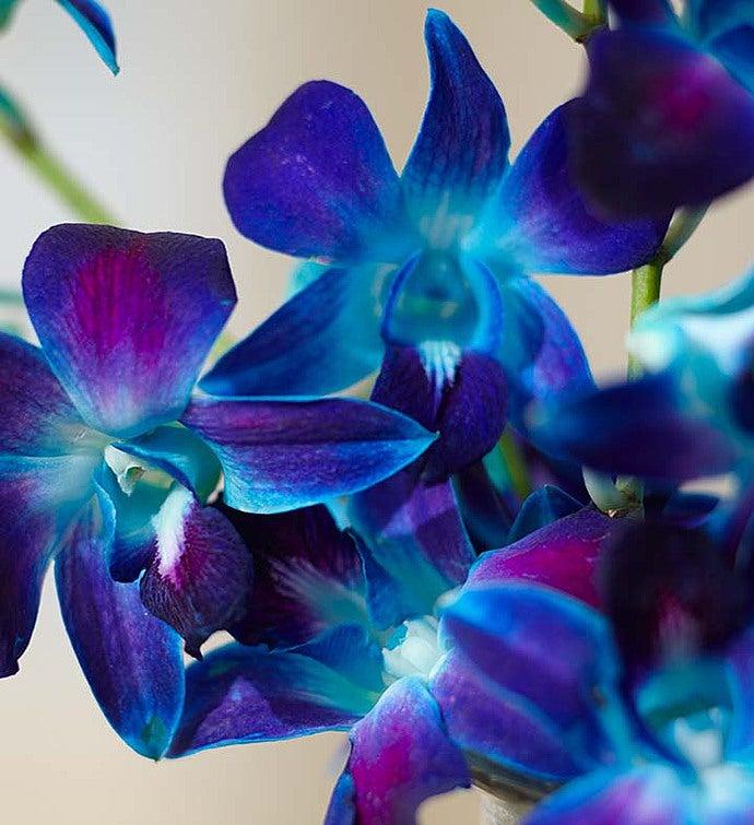 Ocean Breeze Orchids