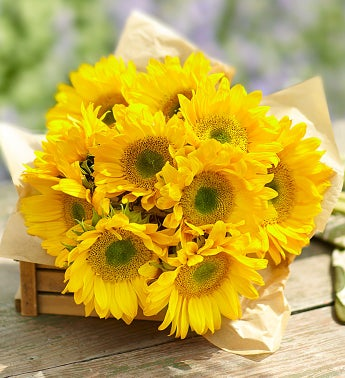 Sunbeam Sunflowers