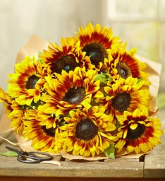 Mahogany Sunflowers