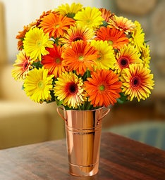 Assorted Fall Gerbera Daisies