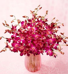 Vibrant Pink Orchids, 10-20 Stems