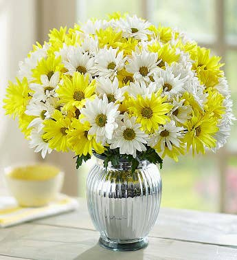 Yellow & White Daisies + Free Vase