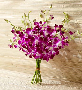 10 Stems of Exotic Breeze Orchids