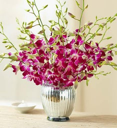 Exotic Breeze™ Orchids + Free Premium Vase