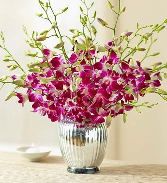 Exotic Breeze Orchids + Free P...