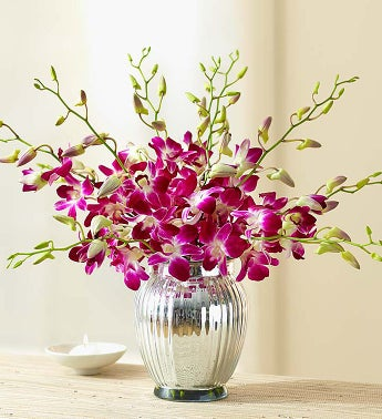 Exotic Breeze Orchids + Free Premium Vase