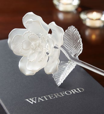 Waterford White Pearl Rose