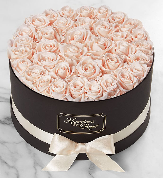 Magnificent Roses Preserved  Blush Roses