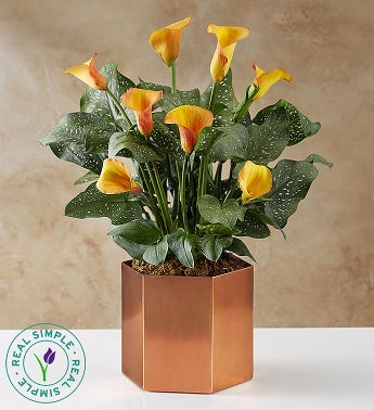 majestic fall calla lily by real simple