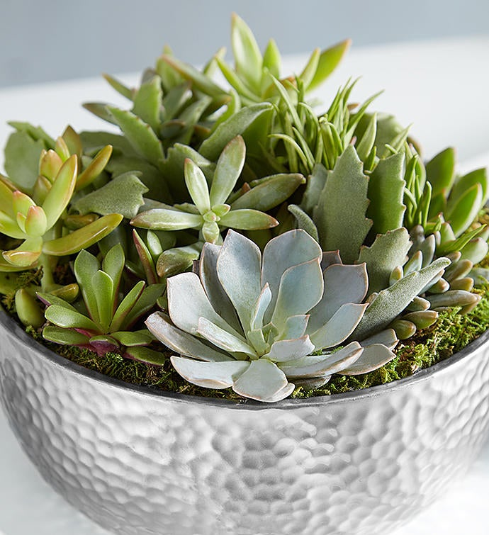 Grand Succulent Garden for Sympathy