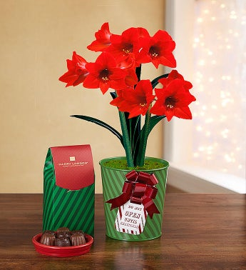 December - Real Simple Holiday Amaryllis