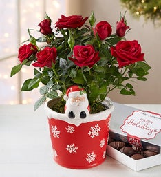 Santa's Merry Red Rose Plant