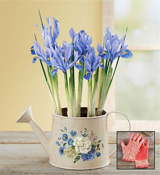 Iris Meadow Blooms Watering Can + Free Gloves