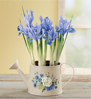 March - Iris Meadow Blooms Watering Can