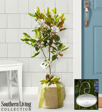magnolia tree by southern living - Christmas Trees For Sale Near Me
