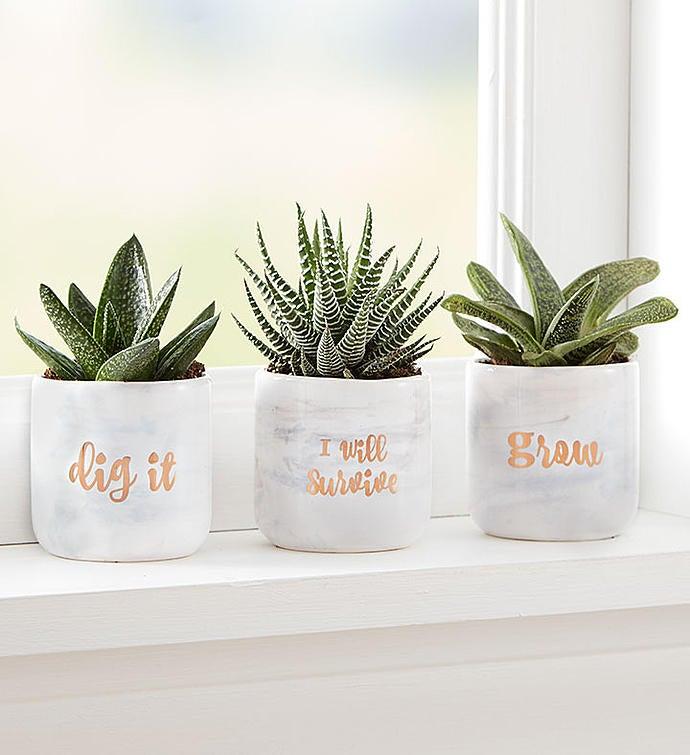 """""""Dig It"""" Succulent Trio"""