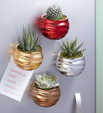 Holiday Ornament Magnetic Succulents
