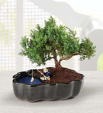 Zen Reflections Bonsai