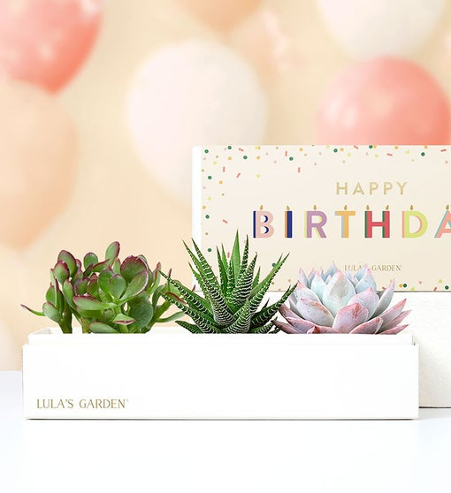 Happy Birthday Succulents by Lula's Garden