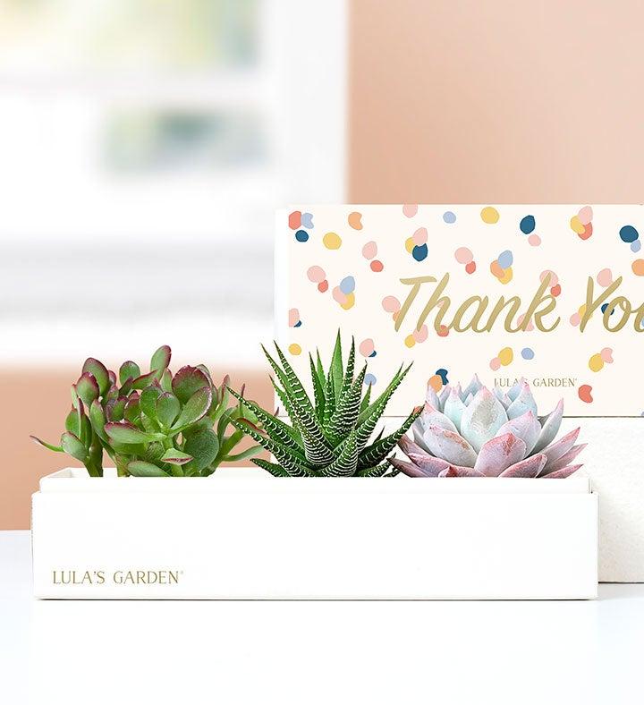 Thank You Succulents by Lulas Garden
