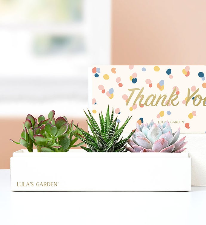 Thank You Succulents by Lula's Garden