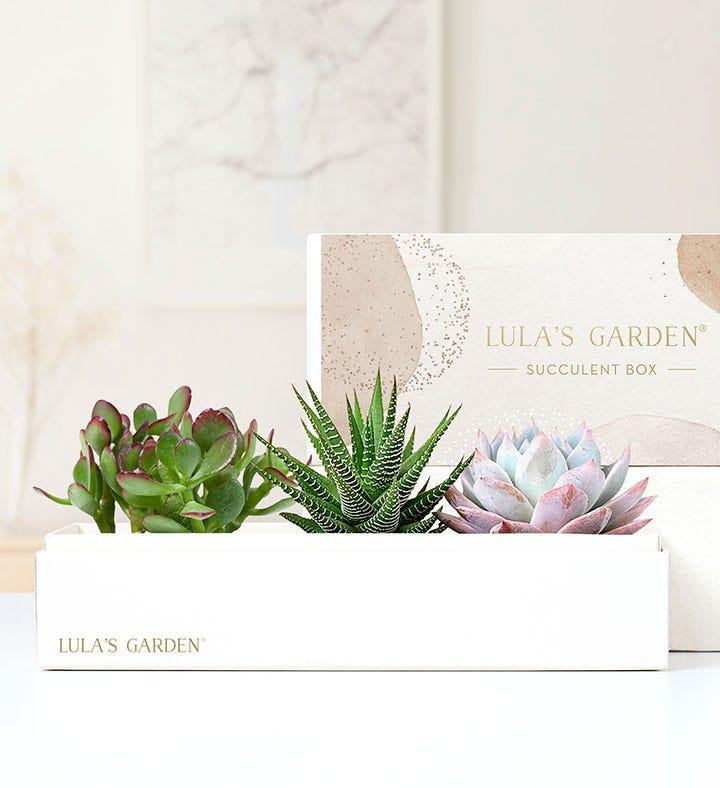 Succulents by Lulas Garden