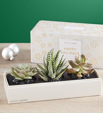 Lula's Holiday Succulents