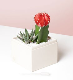 XOXO Succulents by Lula's Garden