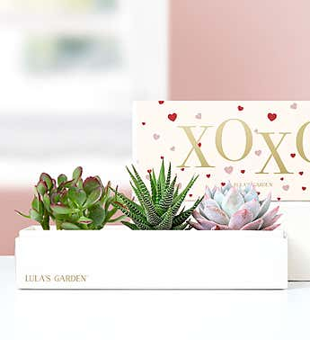 XOXO Succulents by Lula's Garden®