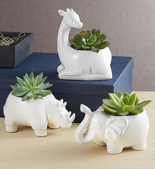 Safari Animal Succulents