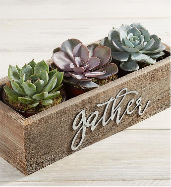 Autumn Gathering Succulents