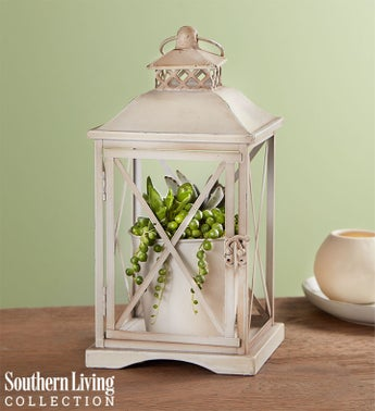 Rustic Lantern Succulents by Southern Living®