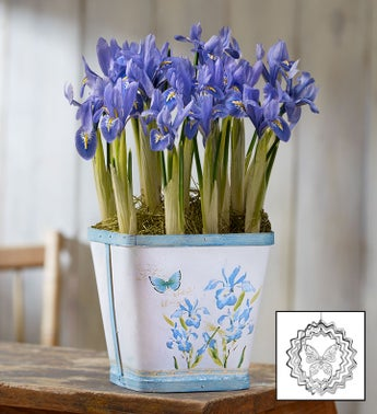 Spring Meadow Iris Bulbs + Free Suncatcher