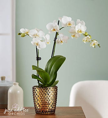 Simple Splendor Mini Orchid
