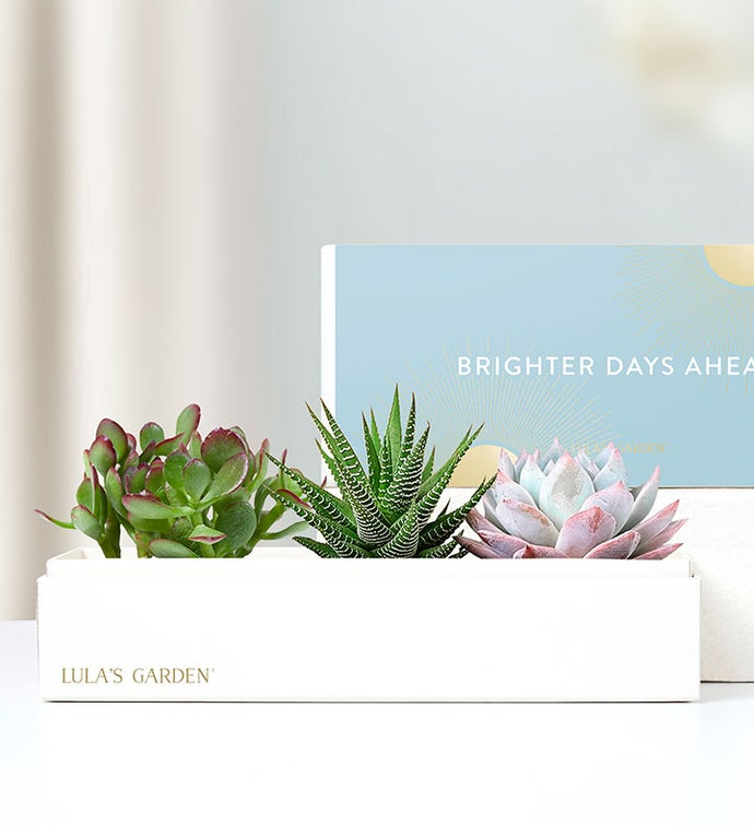 Brighter Days Ahead Succulents by Lula's Garden