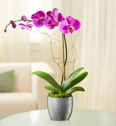 Graceful Blooming Orchid