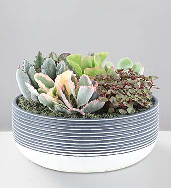 Blissful Succulent Garden