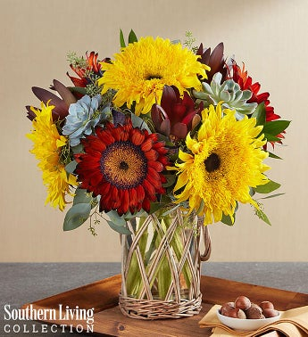 Sunflower succulent garden by southern living 1800flowers sunflower succulent garden by southern living mightylinksfo