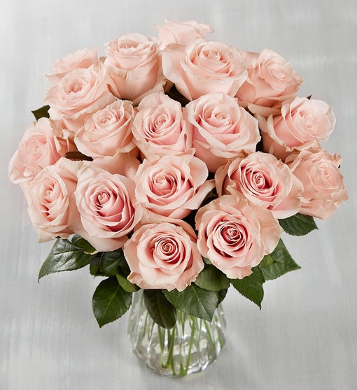Ecuador Premiere Light Pink Roses, 18 Stems