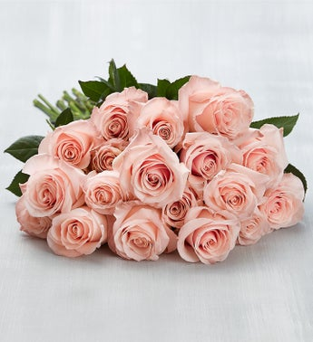 Ecuador Premiere Light Pink Roses 18 Stems