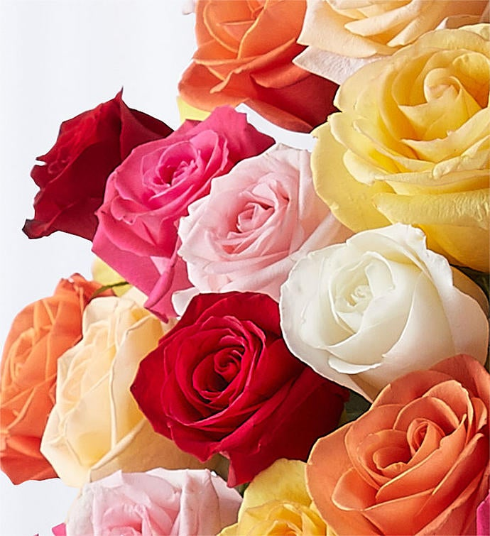 Premium Long Stem Multicolored Roses