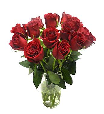 14 Red brazilian Roses (vase not included)