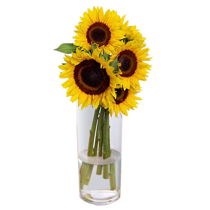 Sunflowers in a vase