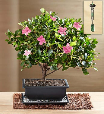 Plants Send Plant Gifts Potted Trees Online 1800flowers